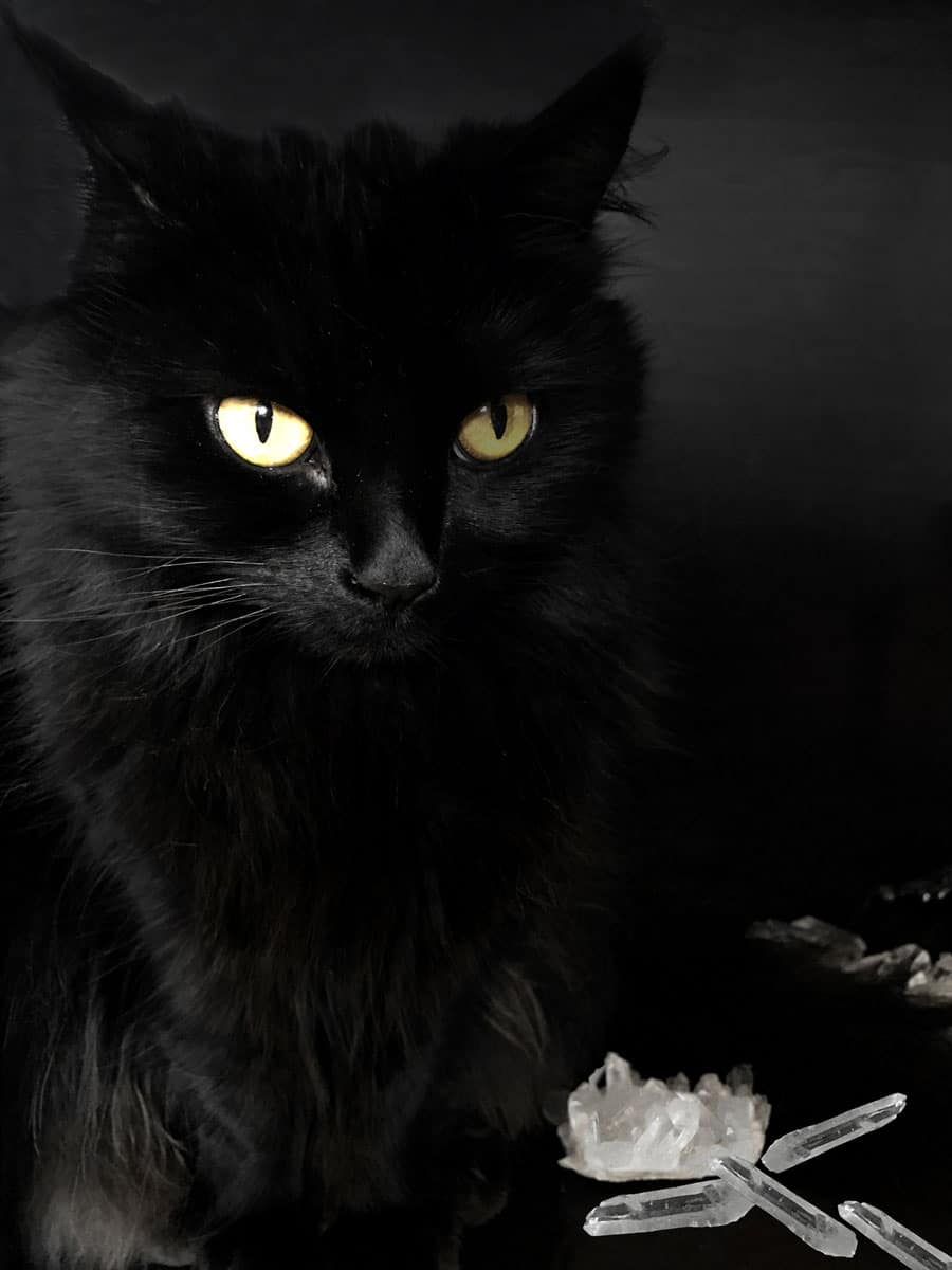 black-cat-alice-and-crystals